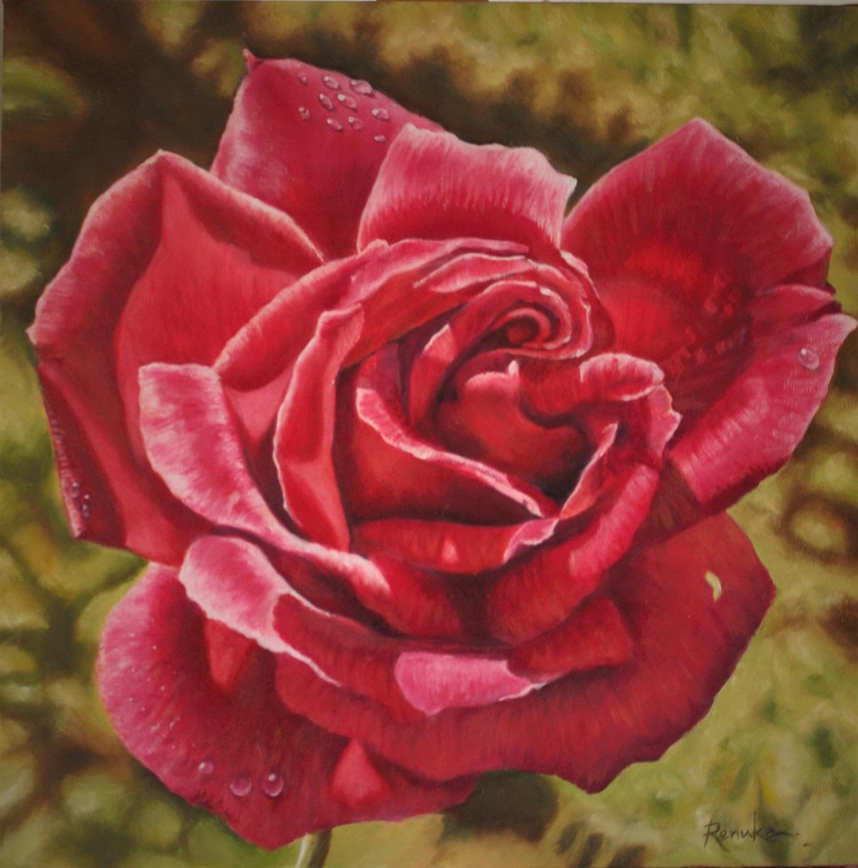 Morning Rose